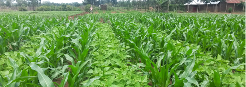 Assessment of the gaps of Ecological Organic Agriculture (EOA) practices and Technologies into the National Agriculture Systems in Rwanda